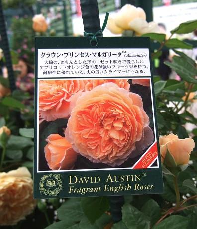 第10回 International Roses & Gardening Show International Roses & Gardening Show 国際バラとガーデニングショウ デビッド・オースチンのイングリッシュローズアベニュー クラウン・プリンセス・マルガリータ 説明