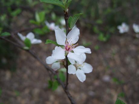 六義園 しだれ桜と大名庭園のライトアップ 駒込・千石・巣鴨4_s