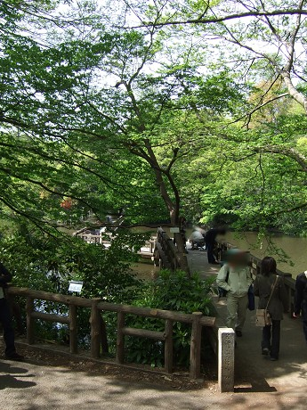 井の頭公園 新緑と噴水