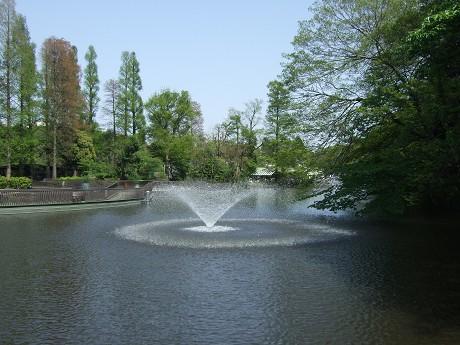 井の頭公園 新緑と噴水_1