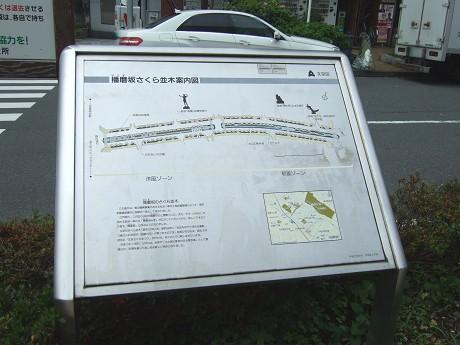 播磨坂さくら並木と旧富坂・旧竹早町 文京区_3