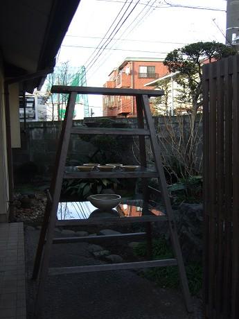 夏椿(なつつばき) 世田谷 上町_4