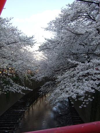 目黒川でお花見 満開の桜たち 2010 中目黒・池尻大橋_18