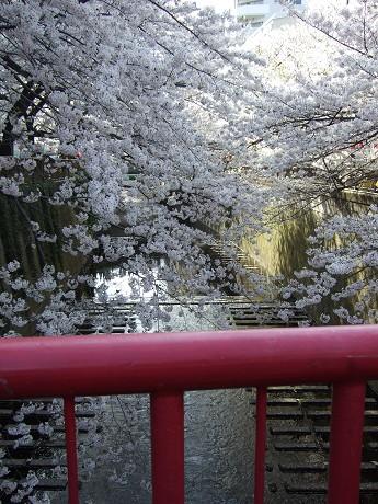 目黒川でお花見 満開の桜たち 2010 中目黒・池尻大橋_19