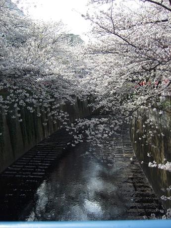 目黒川でお花見 満開の桜たち 2010 中目黒・池尻大橋_27