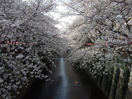目黒川でお花見 満開の桜たち 2010 中目黒・池尻大橋_5