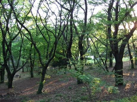 代々木公園 代々木公園・原宿・明治神宮前・代々木八幡