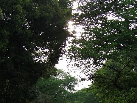 駒沢オリンピック公園 駒沢公園