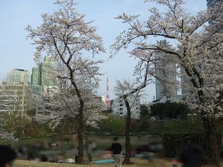 桜 2011_10