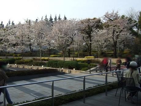 桜 2011_9