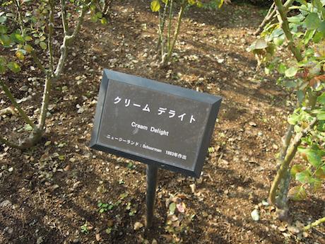 新宿御苑 2011 バラ_26