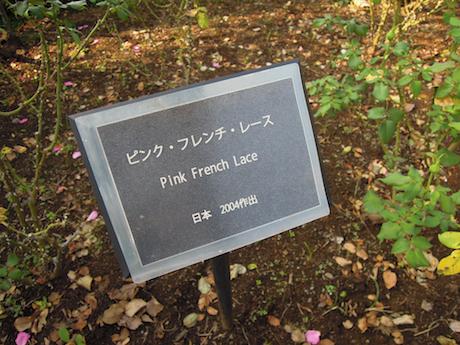 新宿御苑 2011 バラ_28