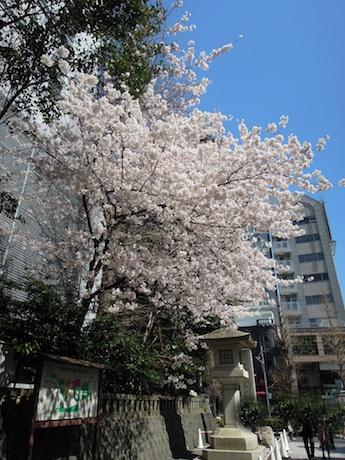 桜 2012 1 東郷神社・東郷記念館 原宿・明治神宮前