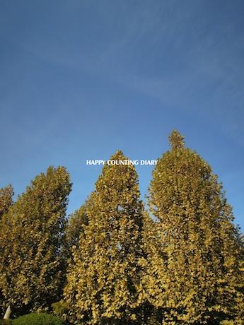 新宿御苑 2012 プラタナスの並木