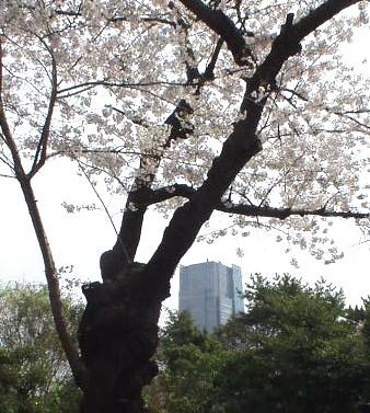 東京ミッドタウン/Tokyo Midtown